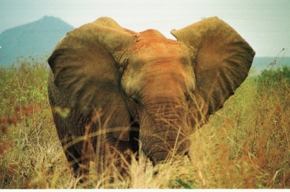 running cadence elephant
