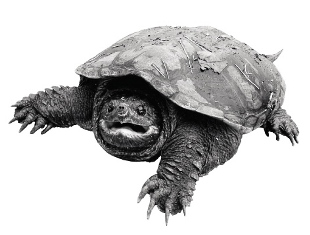 Beginner Running Tips Tortoise2
