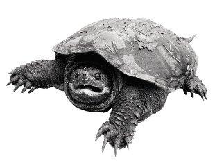 Beginner Running Tips Tortoise2
